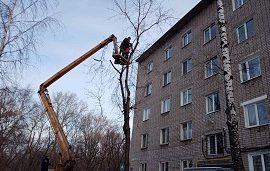 Кронирование деревьев на придомовых территориях